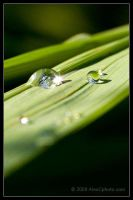 Water Droplets by AlexCphoto