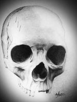 Skull Drawing by t3h4ndy