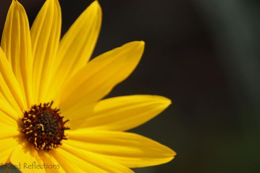 Looking to the Sun by TwigFanatic