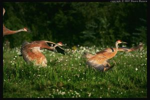 Sandhill Three : color by wroth