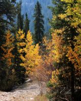 Guanella Pass by 1001G