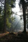 Forest Of Dean 2 by angel1592Stock