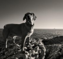 the dog and lighthouse... by denis2
