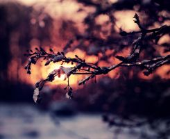Snow & December Sun by Peterix