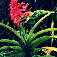 Tropical Flower by Lesbehonest