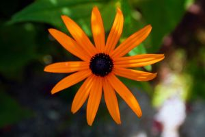 A Flower By Any Other Colour by marmots