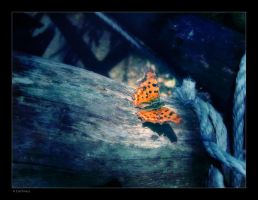 Butterfly by caithness155