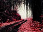 Red Woods by OpticalIrony