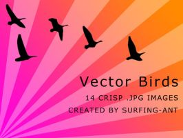 Vector Birds by surfing-ant