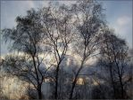 NATURE TREE by agif-aisa