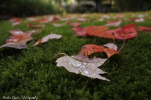 Fallen Leaves by ~Bambi-Claire