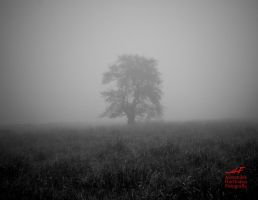 There is a tree by coolathlon