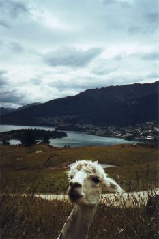 Llama on the Mount by Caethilia-Mordon