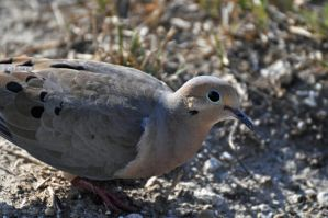 Dove upclose by masscreation