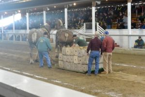 Horse Weight Pulling Competition 5 by Miss-Tbones