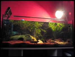 My Axolotl Aquarium by balorkin