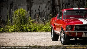 red s-code fastback II by AmericanMuscle