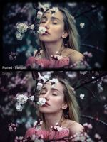 50 Premium Lightroom Presets - Blue Vnitage by mudgalbharat