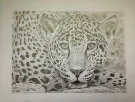 Jaguar Pencil Drawing by Ned-The-Hat
