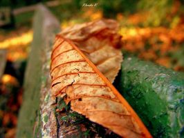 Autumn Leaf by gold-rose