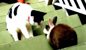 Cat and Bunny meet by Pollito-is-Artzy