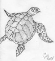 Sea turtle by Nyan-the-Reaper