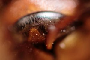 Hornets Eye part by Redsterfish