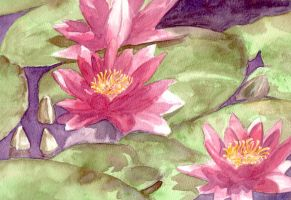 Water Lillies by AlexIKaine