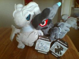 Pokemon Center Reshiram and Zekrom Pokedolls by PokeLoveroftheWorld