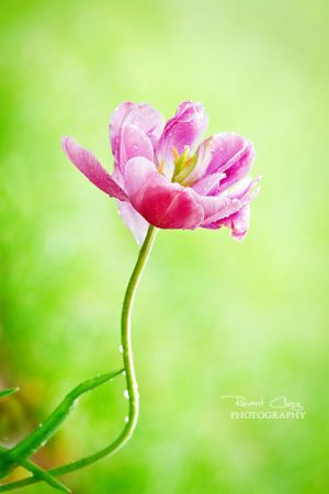 .:Easter Bloom:. by RHCheng