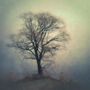 Knoll by intao