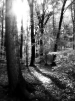 Enchanted Forest by tmjk1975