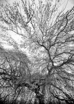 the arms of a Tree by multix