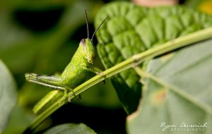 Ahhhh Grasshopper by RDography