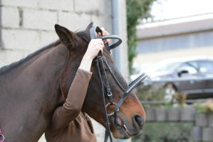 Putting on a Bridle - Step 5 by LuDa-Stock