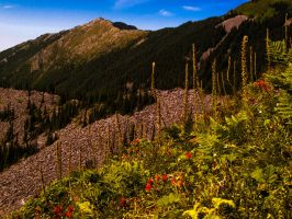 Mountain Flowers by KRHPhotography
