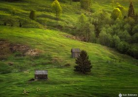 Green Bliss by IoanBalasanu