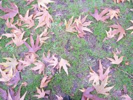 SOU Leaves 4 by wilterdrose-stock