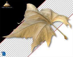 AutumnLeaf 1 by HJR-Designs