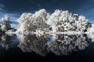 mirrored trees by Astroandre