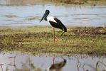 sunsett jabiru by kalascee