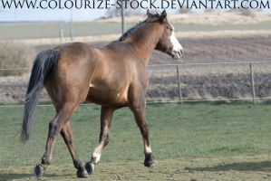 Paintabian Stock 2 by Colourize-Stock