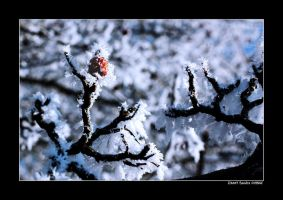 Winter time 1 by grugster