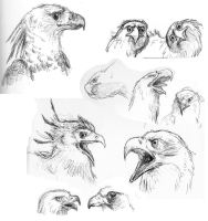 Raptor sketches by StarvingScientist