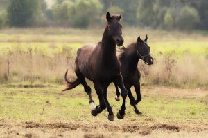 Horses game VII by Lilia73