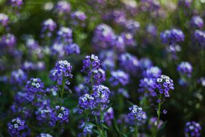 too much violet by JoannaRzeznikowska