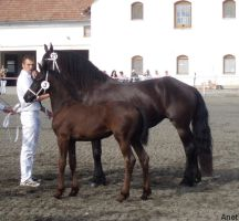 Frieasian horse show V. by Ennete