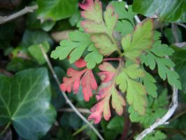 red and green leaf by fierysoul