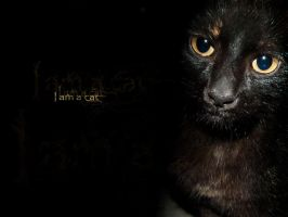 I am a cat by Nechatian