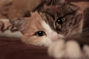 my cute cat ... by sweeti800